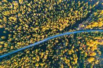 穿越秋季林海的公路 (航拍)