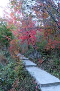 红叶和石板路
