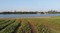 湖边的田野风景