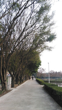 绿道树木风景
