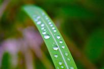 绿色植物特写水珠