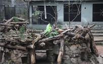 梅花鹿树木房子