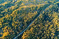 秋季林海山路 (航拍)