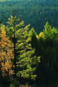 秋季树木光影