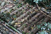 树干组成的道路