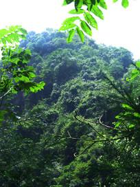 翠枝头掩映下的大山