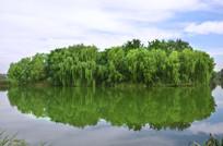 湖面的岛屿