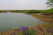 莲花湖湿地河畔风景