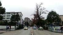 黎平平街头
