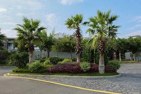 三亚热带植物