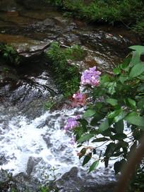 山谷上盛开的绣球花