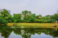 万泉公园的湖与凉亭树林
