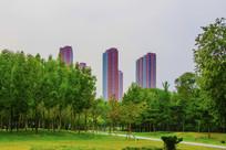 万泉公园树林与高层建筑