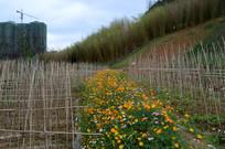 园林中的鲜花