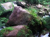 植被与苔藓覆盖的巨石