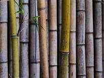 绿色竹篱笆