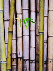 绿色竹篱笆竖构图