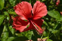 公园大红花