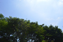 博物馆绿树蓝天风景