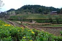 贵州乡村田园风景