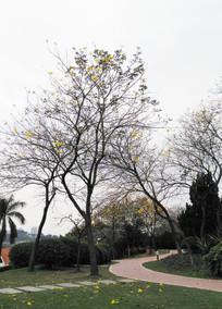 黄花树木风景