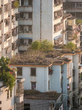 老建筑楼顶的杂草