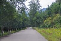 山林乡村路