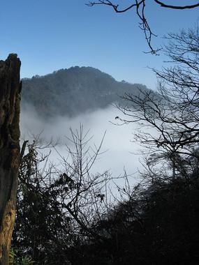 树桩枯枝与云海远山