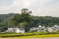 田园山林村庄