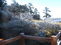 围栏前的冻土