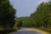 乡村道路风景