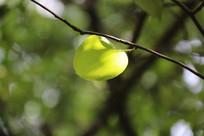 枝头上的嫩绿叶片特写