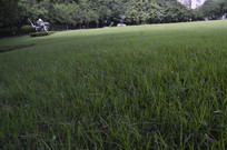 草坪绿茵场