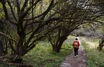 穿越卧龙原始森林