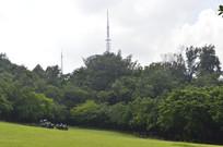 雕塑公园绿化绿植
