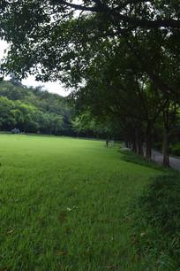 雕塑公园行道树大草坪