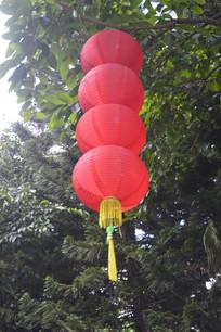 公园树上悬挂的一串红灯笼