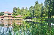 广州东山湖公园风景图片