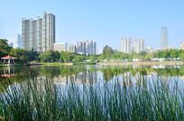 湖泊公园高楼大厦建筑风景