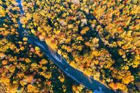 蓝色河流穿越秋季林海 (航拍)