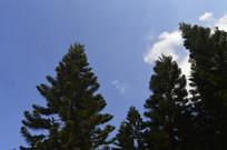 蓝天云朵树木