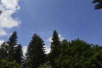 蓝天云树木