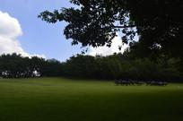绿草如茵的雕塑园