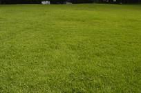 绿化草坪草地