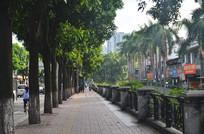 绿树小路风景