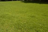 绿油油的草地草坪