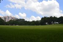 晴空树木草坪