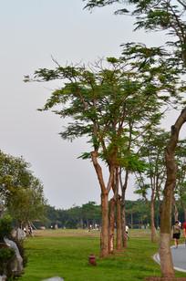 天空草坪树木风景