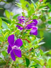 紫色的鲜花