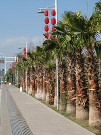 道路边的棕榈树与挂灯笼的灯杆